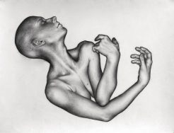 Gestation, 2009, charcoal drawing by Jennifer Ramey
